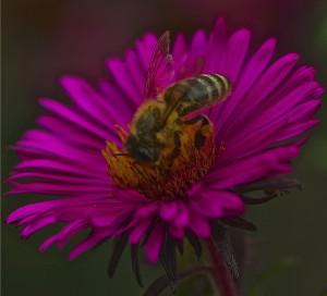 bee gorging